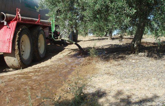 MECAOLIVAR橄榄树中的创新和新技术