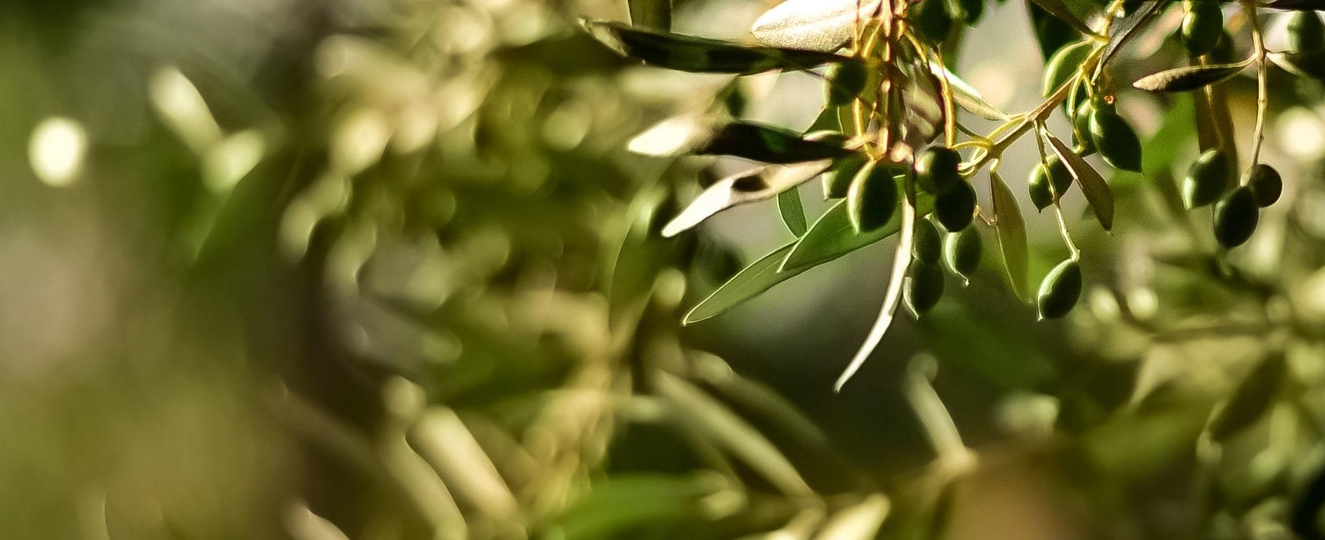 Imagen 每日橄榄油