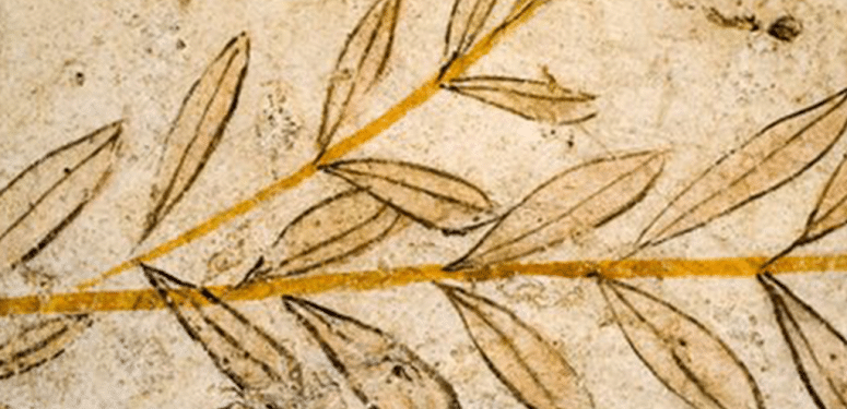 人类文明历史中的橄榄油 – 古希腊时期