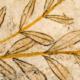 人类文明史中的橄榄油(二)